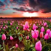 Good Night Beautiful Flowers in Portuguese 5.6.0