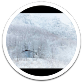 Color Winter Snow LWP