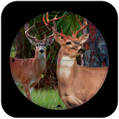Sniper Deer Hunt:jungle hunt