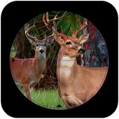 Sniper Deer Hunt:jungle hunt 2.2