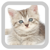 Baby Kittens Wallpapers Free 1.0
