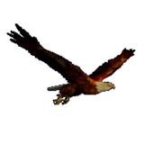 Eagle 1.0