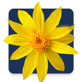 Homeopathy urdu treatment APK Download - Android Medical Apps