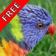 Bird Sounds Nature Sounds App 1.2.5