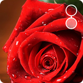 rose live wallpapers 4.0