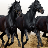 Horses Jigsaw Puzzles Games 1.0