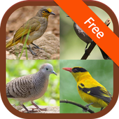 Bird sounds of Thailand 1 3 APK Download - Android Music