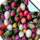 Flower Wallpaper 1.0