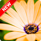 Spring wallpaper 17 apk download android entertainment apps voltagebd Gallery