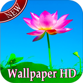 Lotus Live Wallpaper 1.0