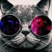 Nyan cat 1.35