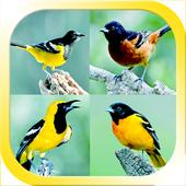 Masteran Burung Alam 1.1