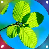 Leaf Live Wallpapers 1.5