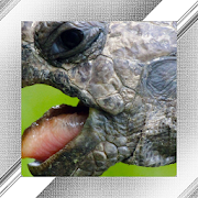 Turtle Photo Frames 1.0.0.23