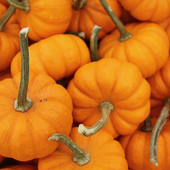 Pumpkin Wallpapers 1.55.0