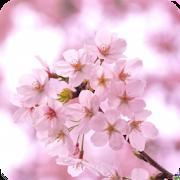 脱出ゲーム 春桜 1.01