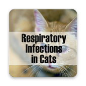 Respiratory Infections in Cats 1.0