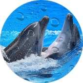 Dolphins Live Wallpaper 1.0