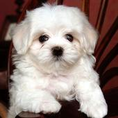 cute dog Puzzle Games 1.0.0