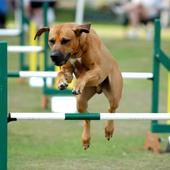 Dog Training 1.0