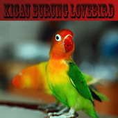 Kicau Lovebird Ngekek Panjang 1.0