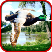 Sniper Duck Hunting 1.3
