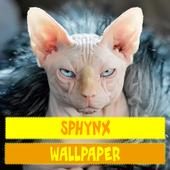 Sphynx Cat Wallpaper 2.0
