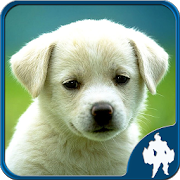 Animal Jigsaw Puzzles 1.8.5