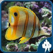 Fish Jigsaw Puzzles 1.6.4