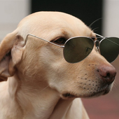 Come Dog 1.0.1
