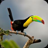com.toucanbird.wallpaper.toucanbird 1.03