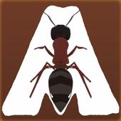 Ant Road 2.0