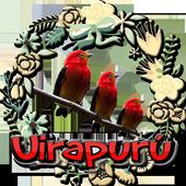 Canto do Uirapuru Verdadeiro 1.2