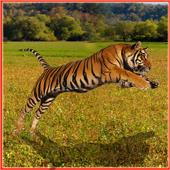 Tiger Hunter 9.9.9
