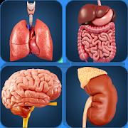 My Organs Anatomy 2.1