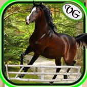 Arabian Horse Jumping 1.8