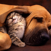 Funny cats and dogs PuzzlesvitudoomPuzzle