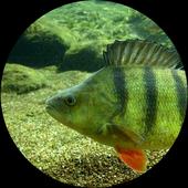 Рыбалка летом 3.0.2