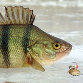 Зимняя рыбалка 3.0.7