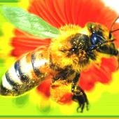 Beekeeping 1.0