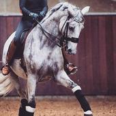 Horsemans Wallpaper 0.1