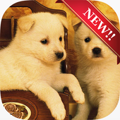 Cute Dog Wallpapers 1.0