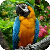 Parakeet Wallpapers 1.2