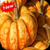 Pumpkin 1.0