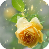 Yellow Rose Animated Wallpaper 1.0