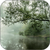 Foggy Stream Live Wallpaper 1.0