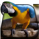 Colorful Parrot Live Wallpaper 2.0