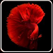 Aquarium Hobby - Learn about Aquarium Fish 1.2.0