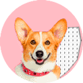 Dog Photography Color By Number Pixel Art 3.0