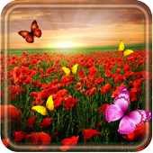 Poppy Flower HD 1.4